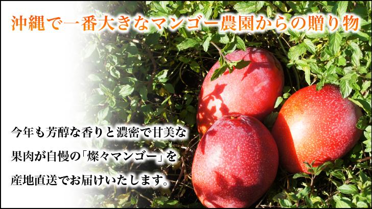 朝のもぎたてを当日出荷、鮮度抜群のマンゴーをお届け。
