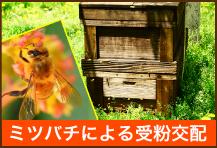 ミツバチによる受粉交配