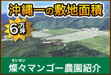 サンサンマンゴー農園紹介